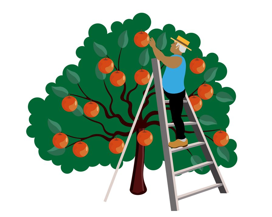 Tripod ladder for cutting and trimming trees or hedges.